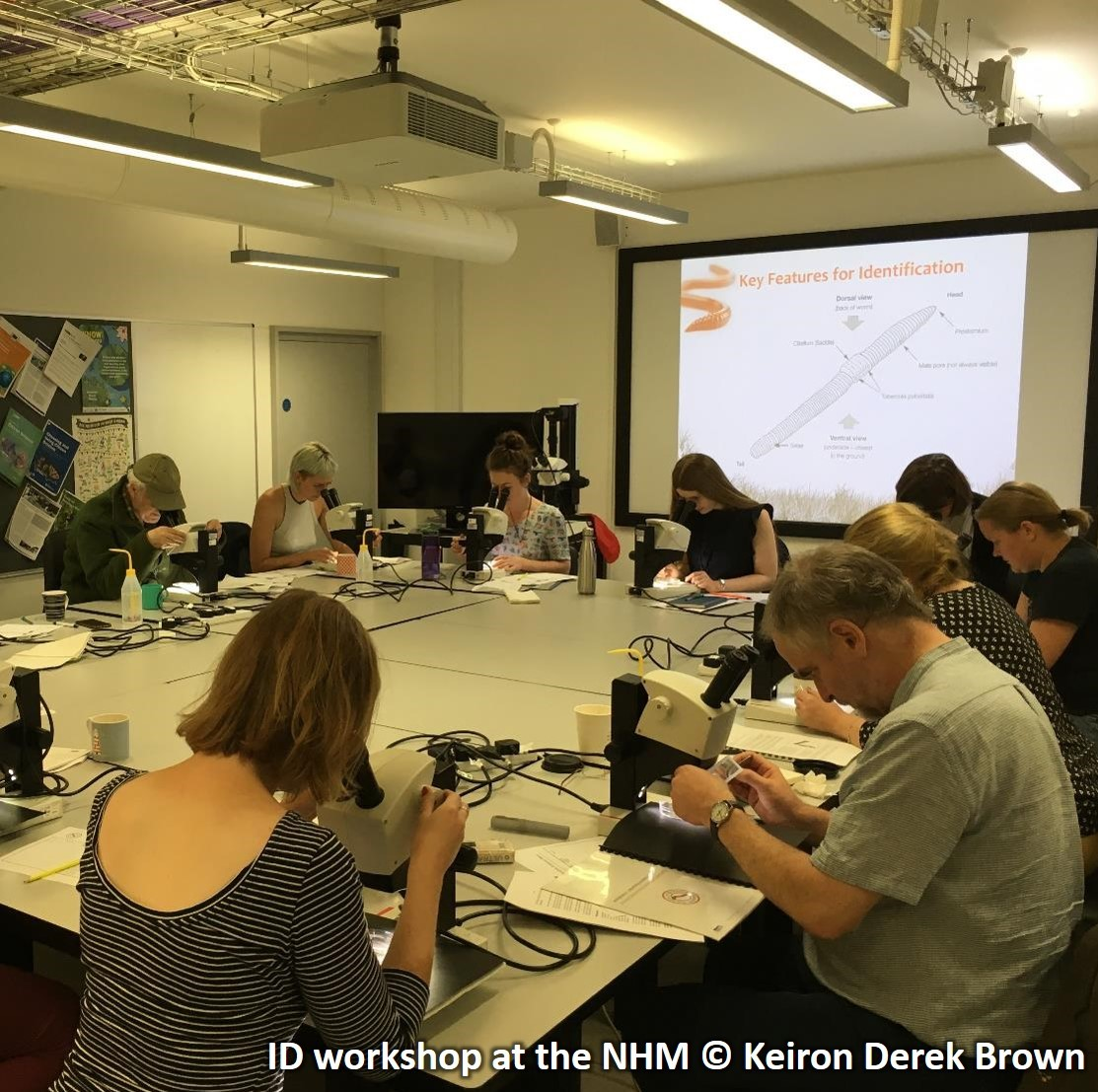 Earthworm ID Workshop at NHM SQUARE